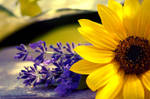 Sunflower with Lavender