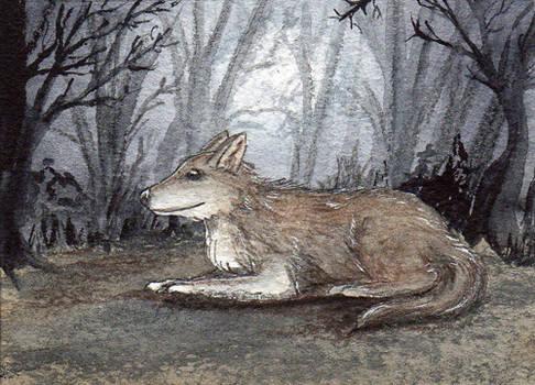 100 - ACEO / KAKAO - Grey Wolf