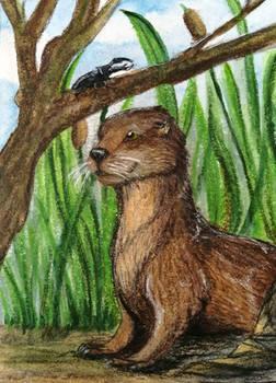#154 - Eurasian Otter - ACEO / KAKAO
