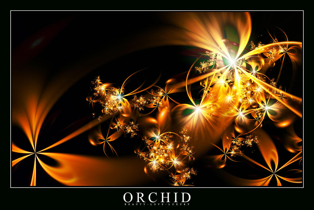 Orchid by judazfx