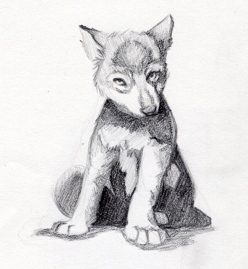 Nedael Wolf_cub_by_alicecross1229-d4trxb4