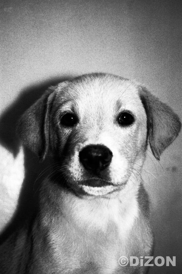 Vintage Puppy by MarshiMallow