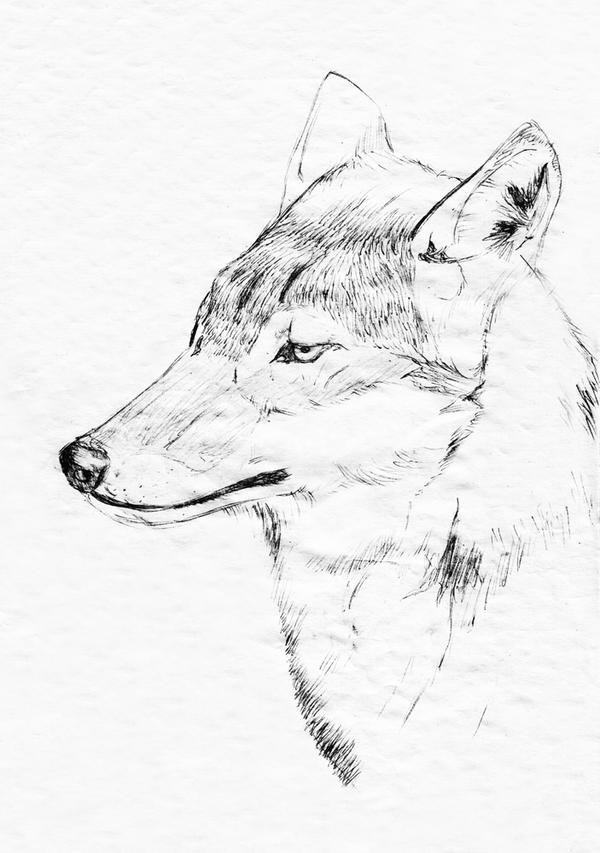 Wolf by TrickyPhantom