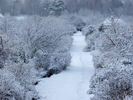 Winter by Wirikos