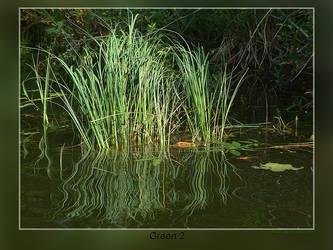 Green 2 by Wirikos