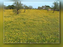 Yellow landscape by Wirikos