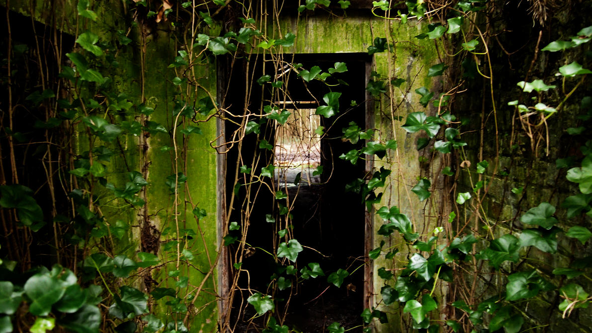 A doorway claimed by nature. by cjeccybut