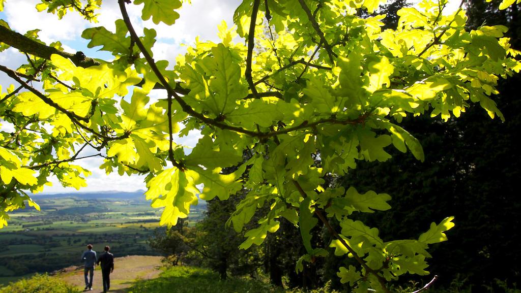 Leafy walks by cjeccybut