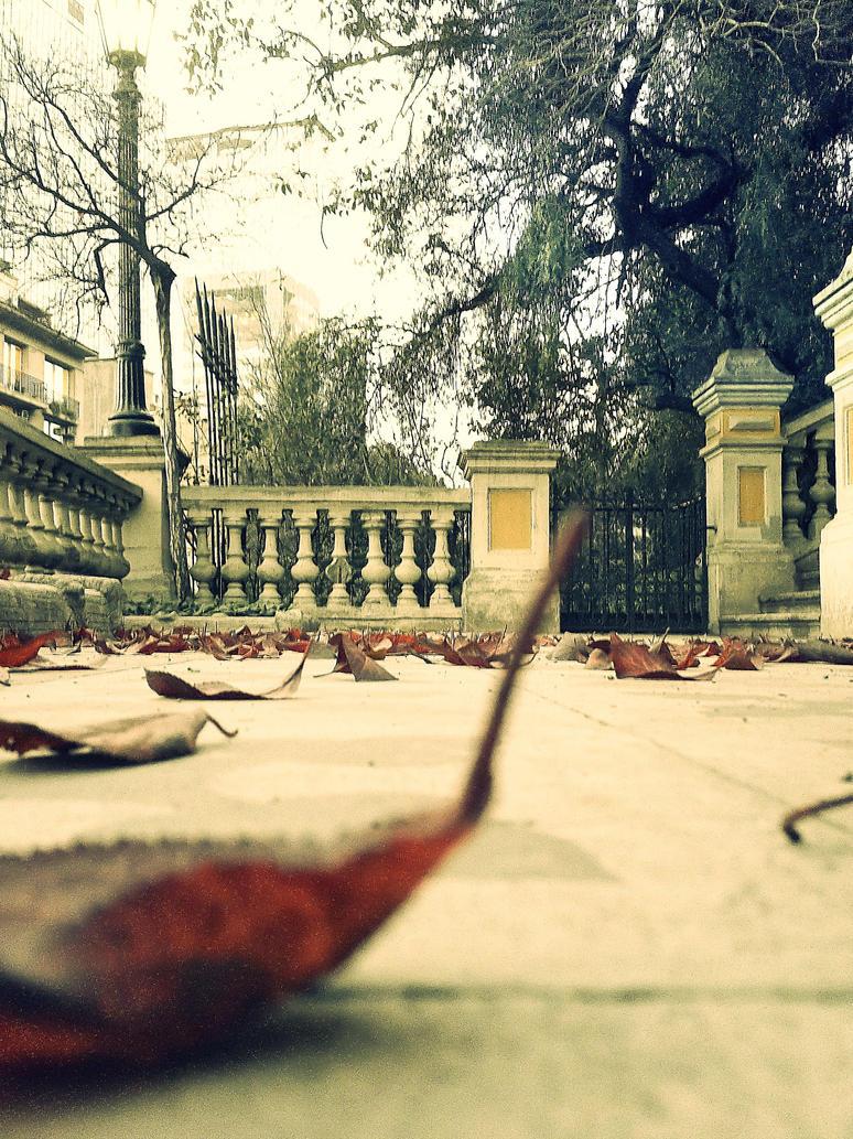 hojas by monazul