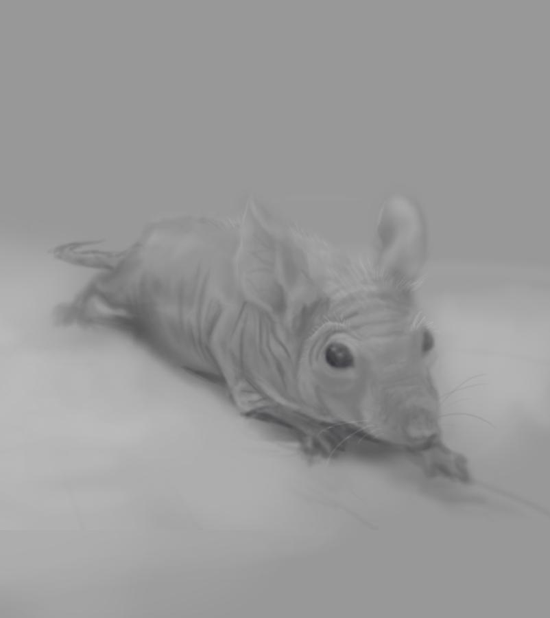 Warmup Rat by budilnik