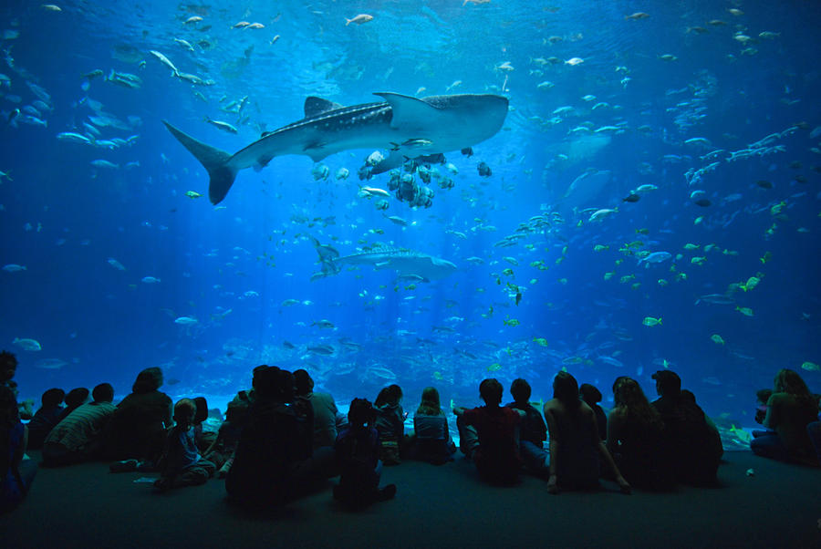 Georgia Aquarium by E-Davila-Photography