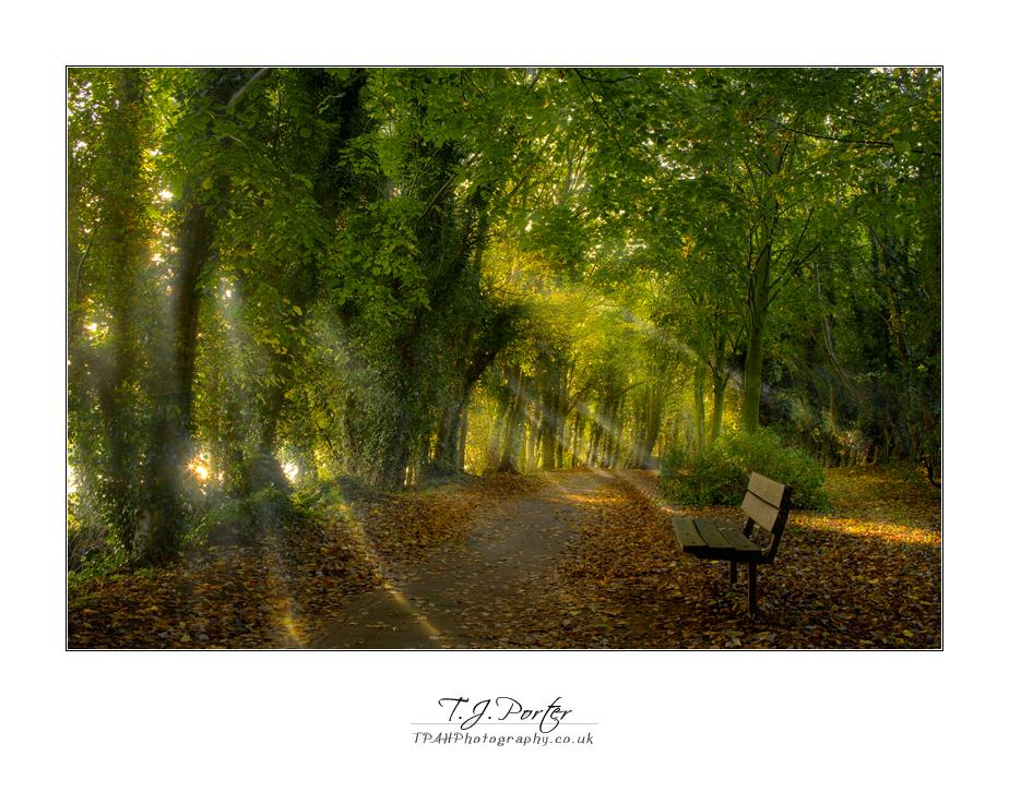 Beauty of the Light by lemondog