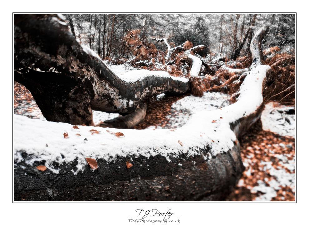 Epping Forest - Autumn-Winter by lemondog