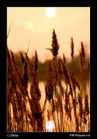 Water Grass Sunset by lemondog
