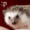 :P - icon by UniqueNudes