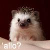 'allo? by UniqueNudes