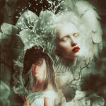 Albino Blend