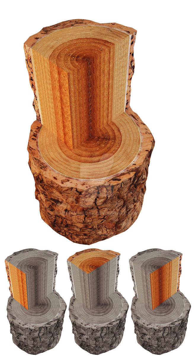 wood_sections