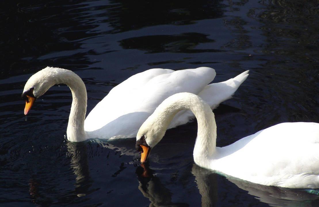 .:Swan:.:Faun:.