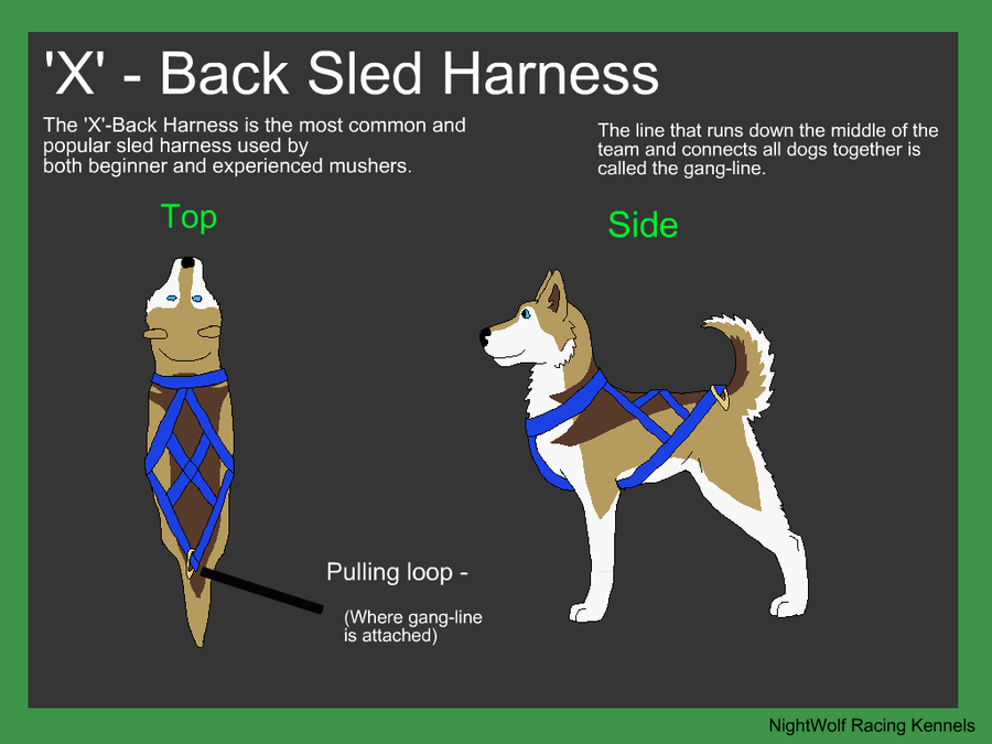 How To Make A Dog Sled Craft
