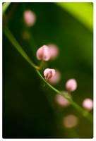 : spring blossom : by mi9ba7