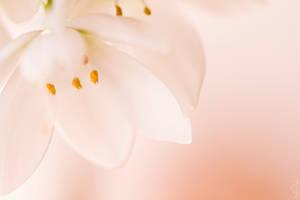 glance of beauty II by mi9ba7