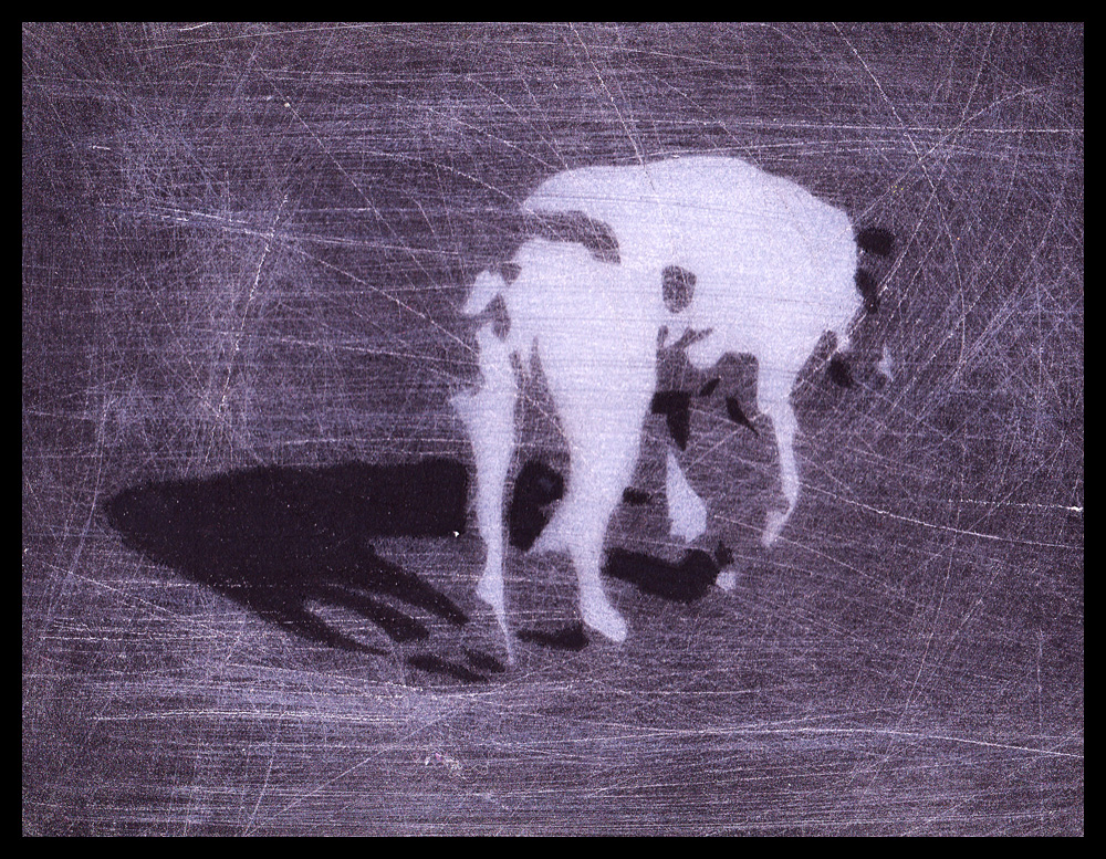 dog_two by rimeligbarsk