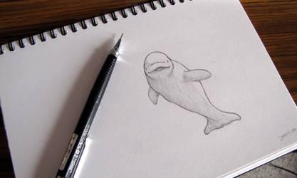 Beluga Sketch
