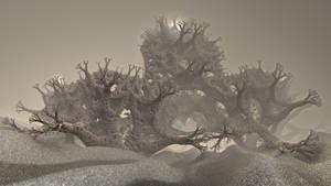 Coralliferous
