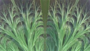 Elymus fractalus