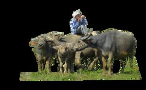 Buffalo ( Stock PNG ) by Cucu-Fuang