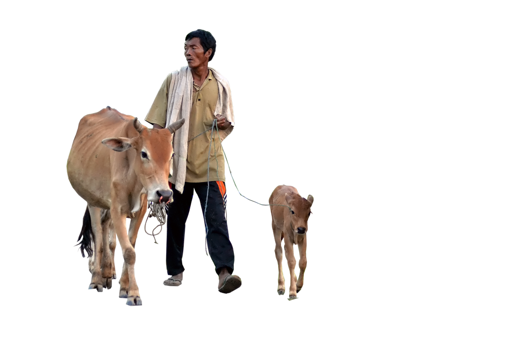 Cow ( Stock PNG ) by Cucu-Fuang