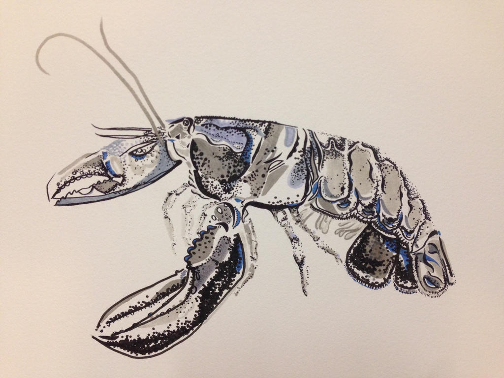 Lady lobster by nicolecurcis