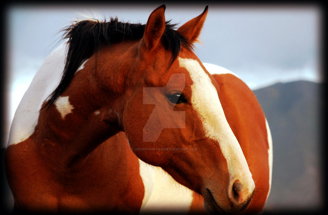 Favorite Horse Photo 9-24-2007 by houstonryan