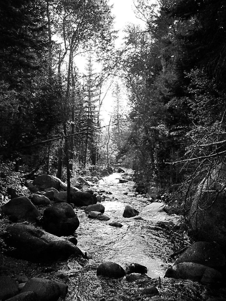 Black White Stream Trees Photo by houstonryan
