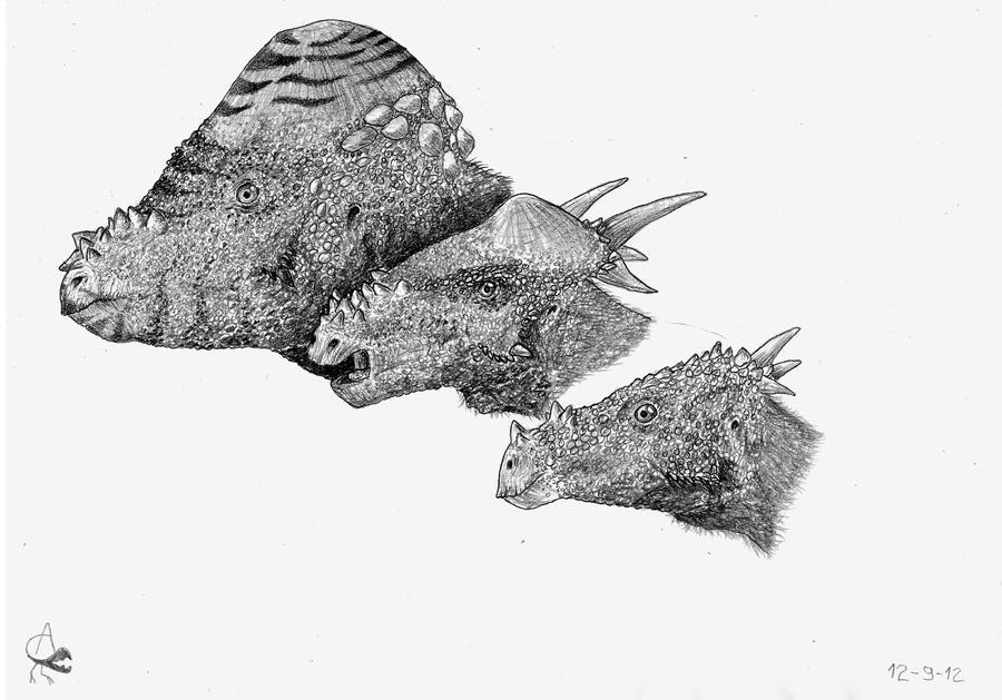 pachycephalosaurus_ontogeny_____by_xezansaur-d5ek27g.jpg