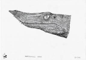Anatosuchus minor head by Xezansaur