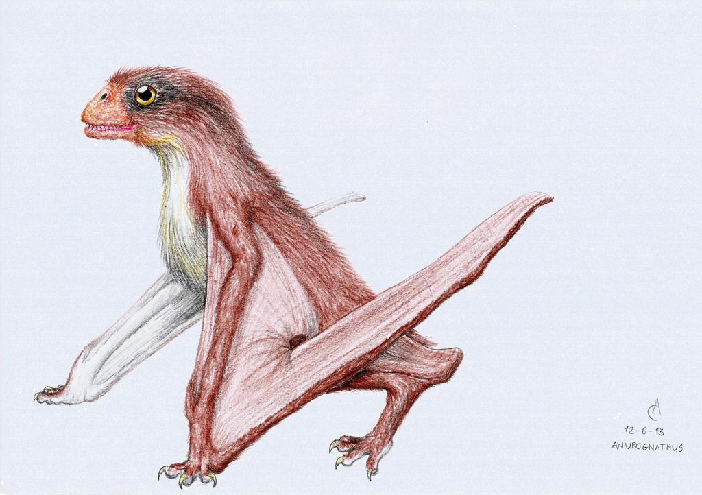 Anurognathus ammoni by Xezansaur