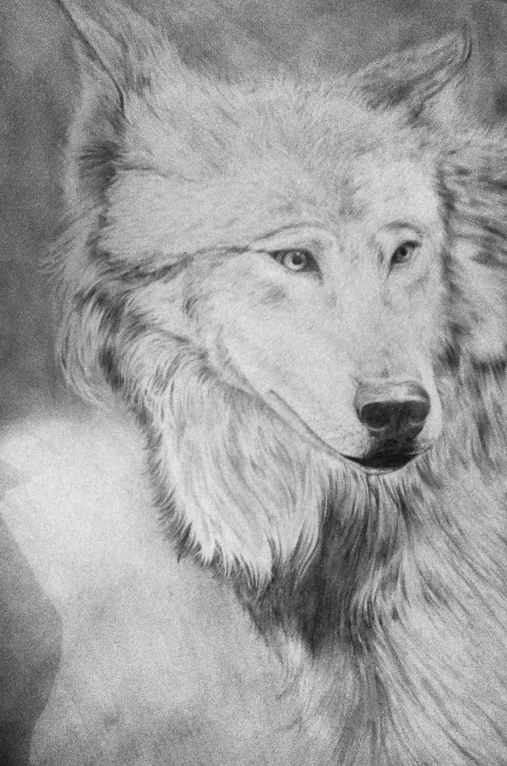 Wolf. by Arisu-o3o
