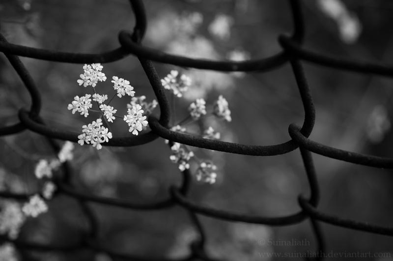 Beautify the Chain by Suinaliath