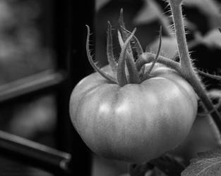 Baby Tomatoes 09 by Suinaliath
