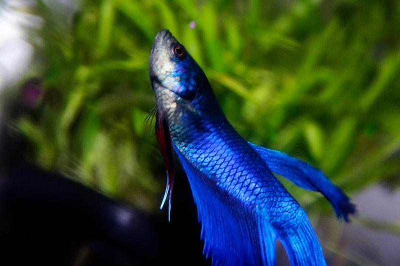 Blue by KawaiiiYuff