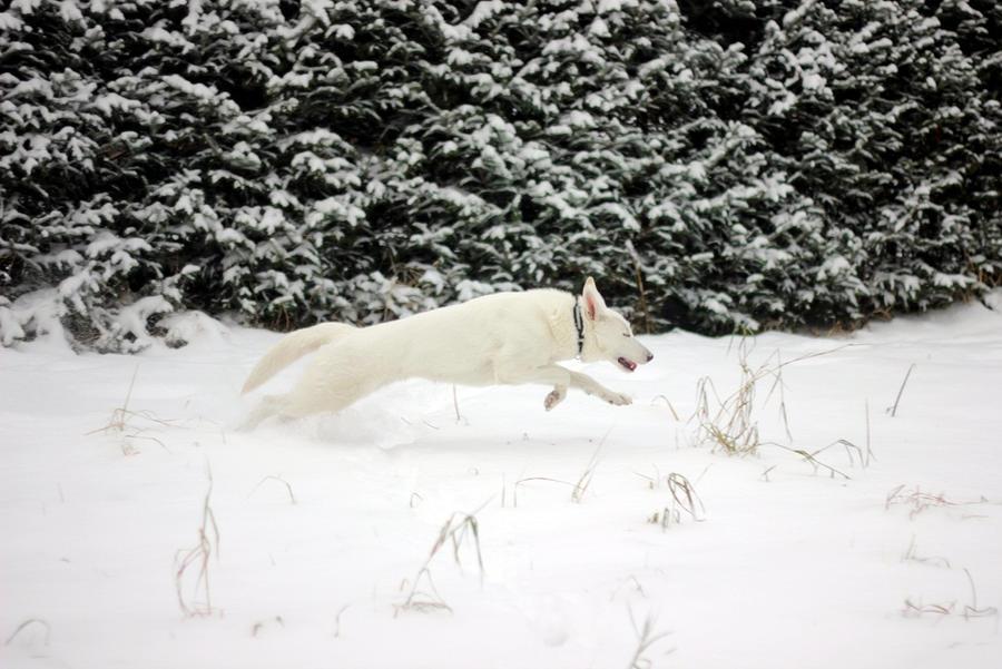 Snow doggie by Neko95