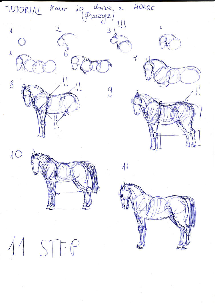 How To Draw A Dressage Horse By Arvoitusmeri