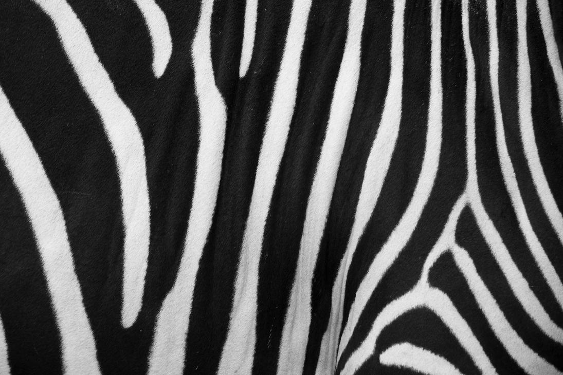 Zebra Striped Animal Starts With Letter K