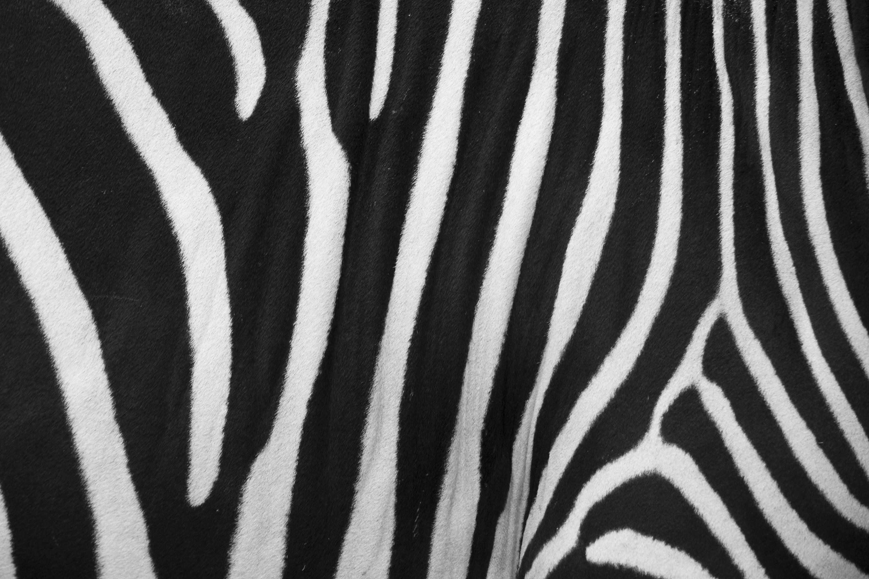 Zebra Skin by photolight