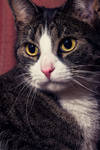 Portrait of a Kitty