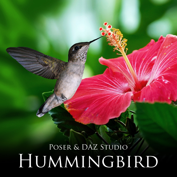 Hummingbird by adamthwaites