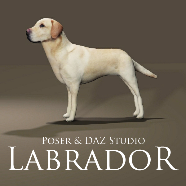 Labrador by adamthwaites