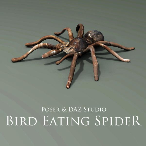 Bird Eating Spider by adamthwaites